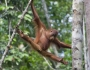 Trekking in Borneo Featured Image
