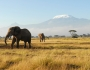 African Safaris: Seeing the Big Five Featured Image