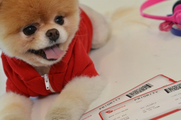 Meet Boo, the world's cutest dog Featured Image