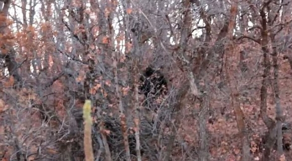 Bigfoot sighting in Utah goes viral Featured Image