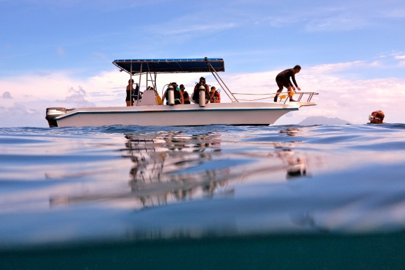 Volunteering in Marine Conservation in the Seychelles Featured Image