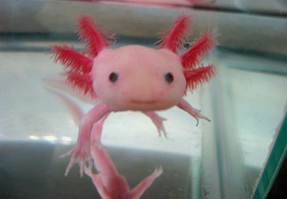 13.01.25-ces-axolotl_1_582_403.jpg