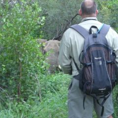 Wildlife encounters on bush walk