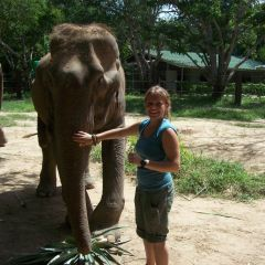 Elephant Care, Thailand
