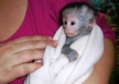 list_image for Wildlife Rehabilitation in KwaZulu-Natal