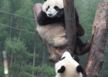 list_image for Work in a Panda Reserve (various roles available)