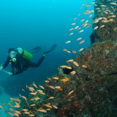 Reef monitoring