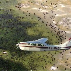 Scenic flight over the Okavango delta.