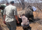 list_image for Rhino Capture Project on a Game Reserve