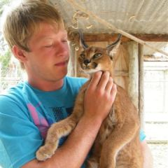 Vol and caracal