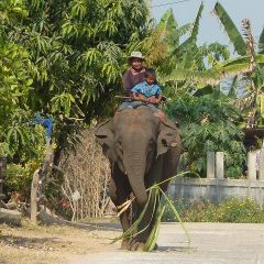 Elefant mit seinem mahout und sohn
