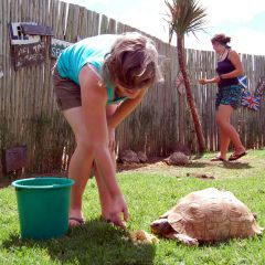 Volunteering - feeding tortoises