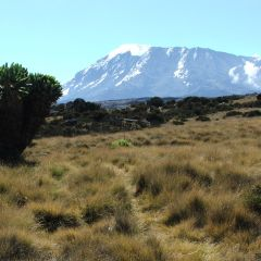Kilimanjaro aug 07 114