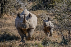 Volunteering with Rhinos in South Africa Featured Image