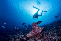Discovery Diving in the Great Barrier Reef Featured Image