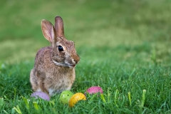 Weird Easter Traditions Around the World Featured Image