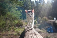 Meet the adventure cats of Instagram Featured Image