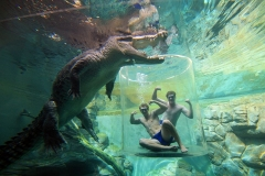 5 Things I Learned Diving with Crocodiles at Crocosaurus Cove Featured Image