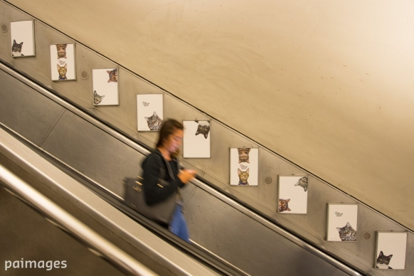 Cat pictures have replaced adverts in this London Underground station Featured Image