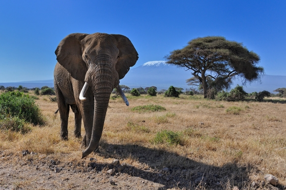 Stop elephants going extinct - go on safari Featured Image