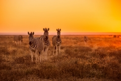 The Top 10 Things to Do in Namibia Featured Image