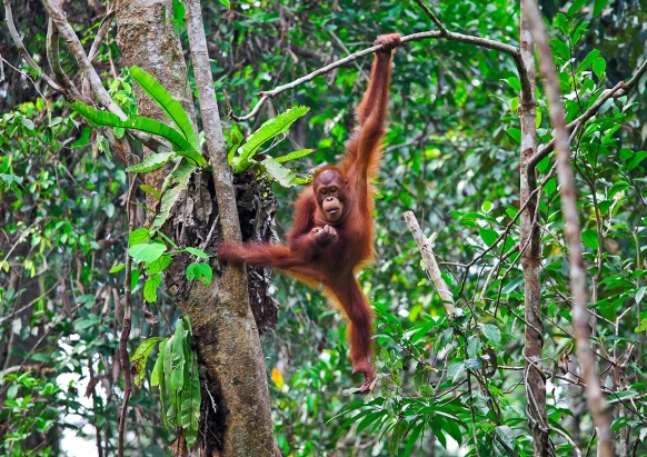 Into The Wild: Life in the Sumatran Jungle Featured Image