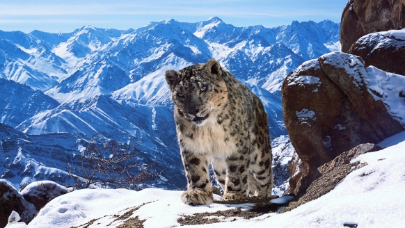 Loved Planet Earth II? 5 Ways to Experience It For Yourself Featured Image