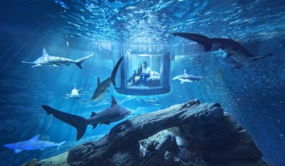Airbnb is offering a room in a shark tank Featured Image