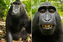 Monkey sort of wins court case Featured Image