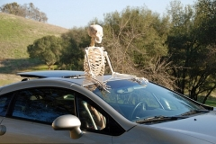 Skeleton on trip of an after-lifetime Featured Image