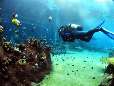 Gapyear.com Guides - Scuba Diving Featured Image