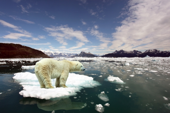 Learn How to Combat Climate Change Featured Image
