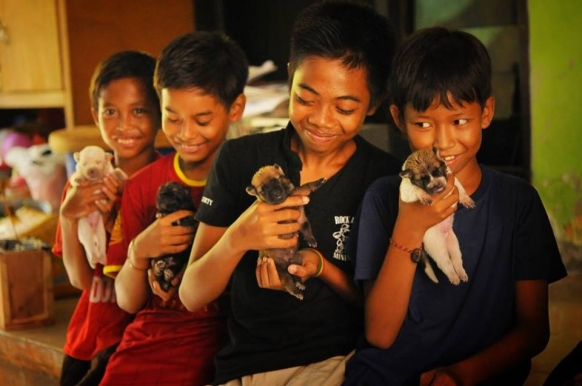 Volunteering with the Stray Dogs of Bali Featured Image