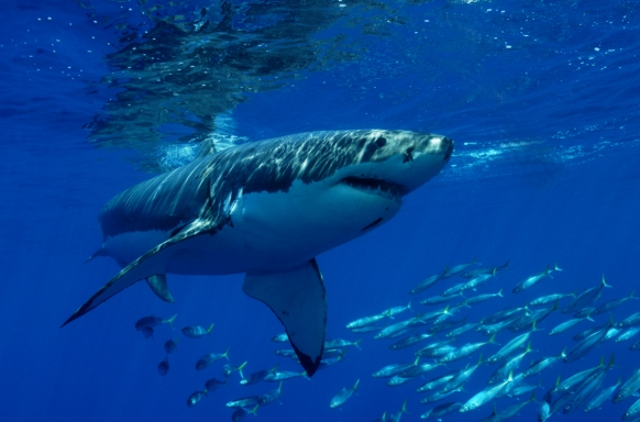 Shark tourism inspires new hostel Featured Image