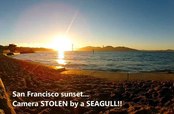 Seagull steals camera in San Francisco Featured Image