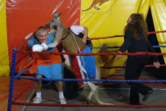 Kangaroo vs human boxing match cancelled Featured Image