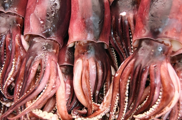 Fishmonger finds bomb inside squid Featured Image