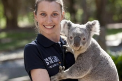 Koala goes for cheeky grope Featured Image