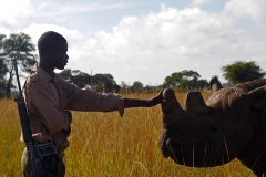Fighting for Conservation in Zimbabwe Featured Image