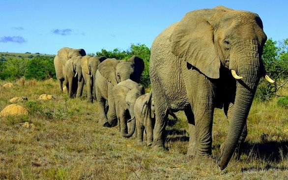 Help preserve elephants on your gap year