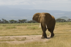81 elephants poisoned in Zimbabwe Featured Image