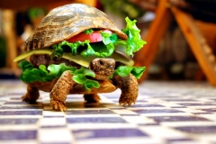 Man attempts to smuggle turtle in a burger Featured Image