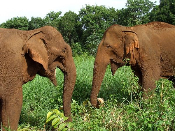 Meet elephants in Mondulkiri, Cambodia