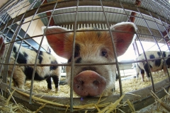Plane drop and pig slop for GoPro Featured Image
