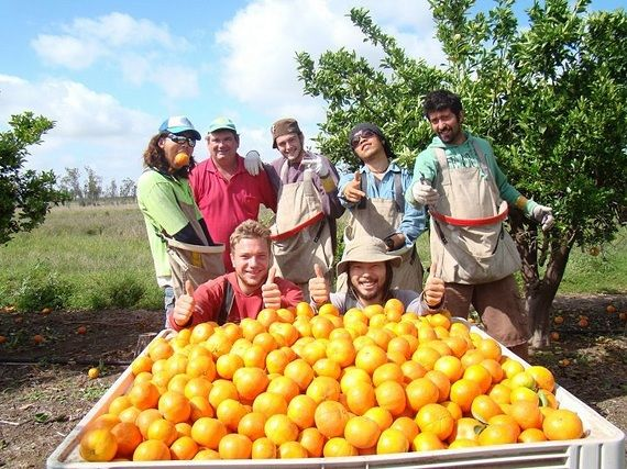 Fruit picking is popular in Australia