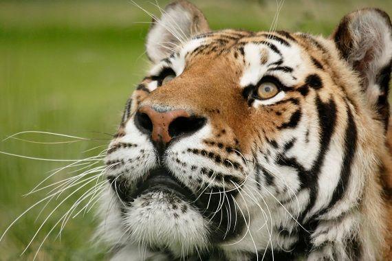 Term paper on Animal Habitats and Enviromental Waste?