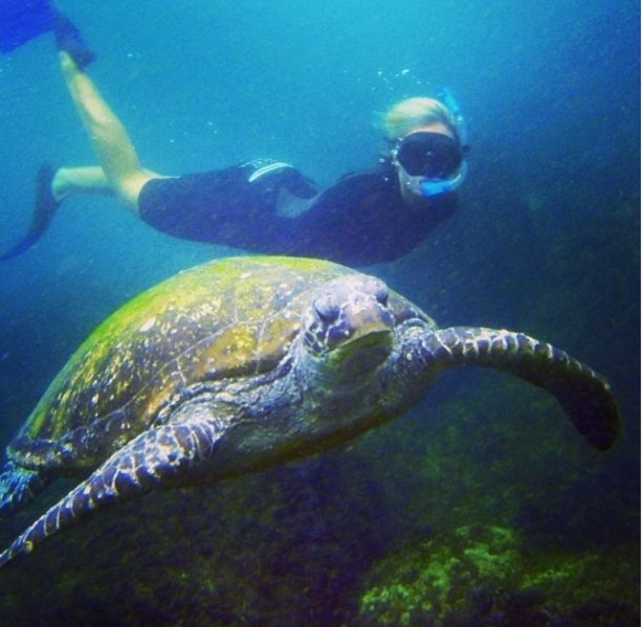 Snorkelling with Turtles on the Gold Coast Featured Image