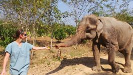 Thailand Elephant Care