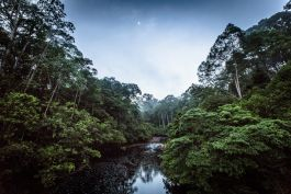 Borneo's incredible rainforest