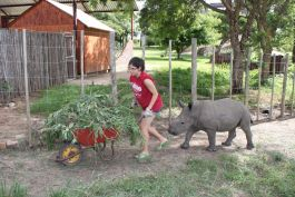 Working with a rhino in tow